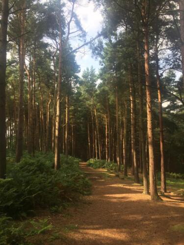 Goit Stock Falls Hike: Woods near Wilsden