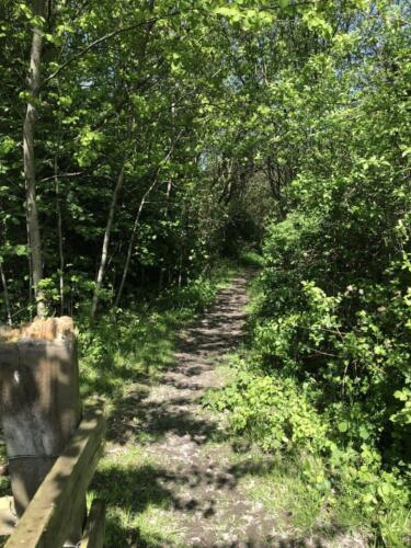 Dalesway Link Hike: Boars Well Nature Reserve