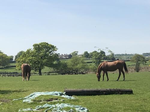 Dalesway Link Hike: Horses at Golcar Farm