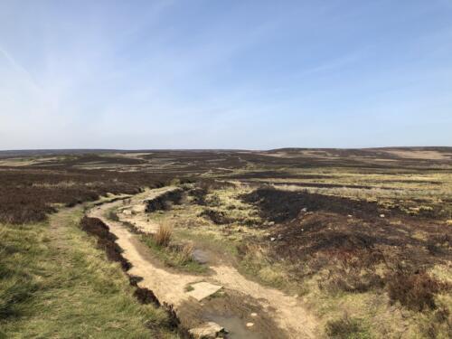 Dalesway Link Hike: Bingley Moor