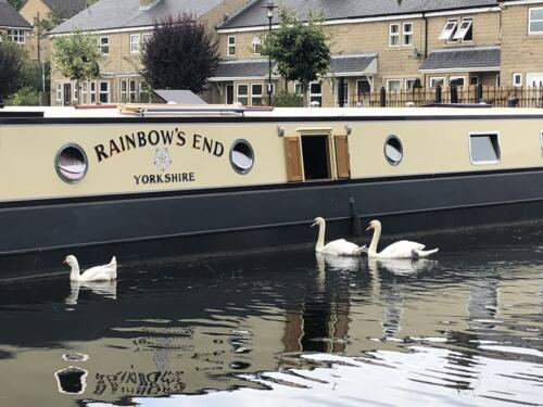 Norr Hill Hike: Swan Family on the Leeds Liverpool Canal