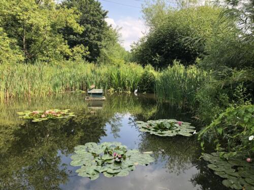 Norr Hill Hike: Hirst Wood Nature Reserve
