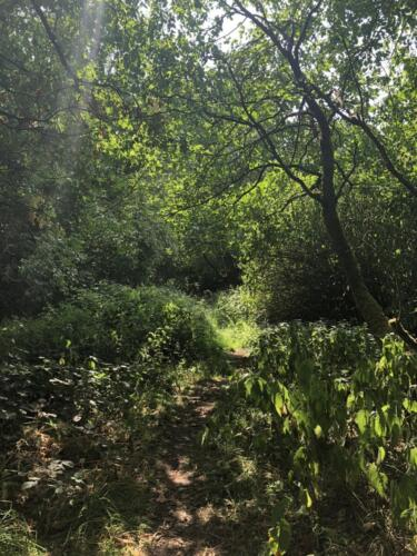 Norr Hill Hike: Cottingley Woods