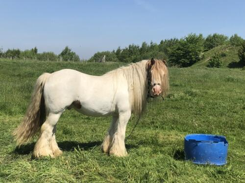 Dalesway Link Hike: Horses, Bolton Woods
