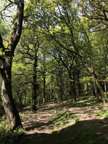 Dalesway Link Hike: Shipley Glen