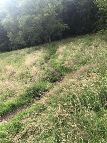 Stoodley Pike Hike: The path leading up through the woods to New Road